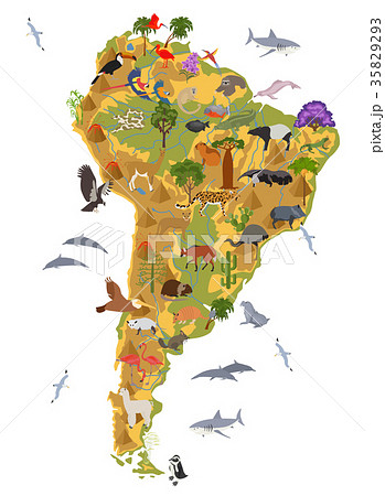 South America flora and fauna map, flat elements 35829293