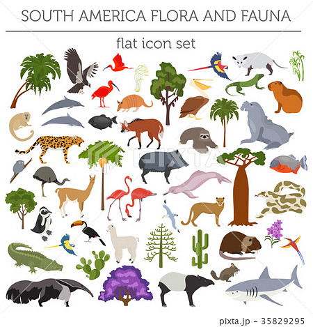 South America flora and fauna flat elements 35829295