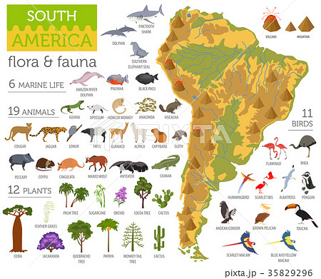 South America flora and fauna map, flat elements 35829296