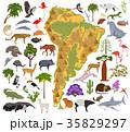 南米大陸 フローラ 植物相のイラスト 35829297
