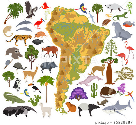 South America flora and fauna map, flat elements 35829297