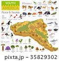 南米大陸 動物 鳥のイラスト 35829302