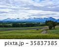 十勝連峰 ラベンダー畑 自然の写真 35837385