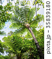ヒカゲヘゴ ジャングル 植物の写真 35839180
