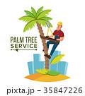 ベクトル 樹木 樹のイラスト 35847226