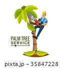 ベクトル 樹木 樹のイラスト 35847228