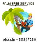 ベクトル 樹木 樹のイラスト 35847230