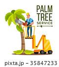 ベクトル 樹木 樹のイラスト 35847233