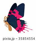 蝶 ピンク ピンク色のイラスト 35854554