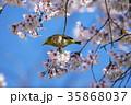 桜とメジロ 35868037