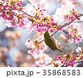 桜 目白 花の写真 35868583