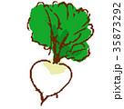 野菜 植物 葉っぱのイラスト 35873292