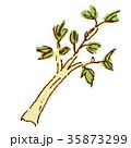 野菜 セロリ 35873299