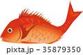 鯛 魚 縁起物のイラスト 35879350