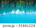 6月の青い池 美瑛 35881228