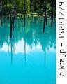 6月の青い池 美瑛 35881229