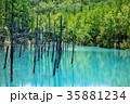 6月の青い池 美瑛 35881234