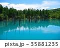 6月の青い池 美瑛 35881235