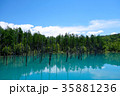 6月の青い池 美瑛 35881236