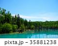 6月の青い池 美瑛 35881238