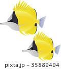 フエヤッコダイ 魚 熱帯魚のイラスト 35889494