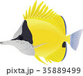 フエヤッコダイ 魚 熱帯魚のイラスト 35889499