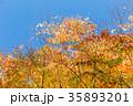 黄葉と青空 35893201