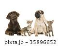 動物 ペット わんこの写真 35896652