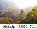 木 霧 風景の写真 35904711