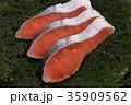 鮭 切り身 銀鮭の写真 35909562