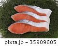 鮭 切り身 銀鮭の写真 35909605