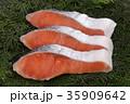 鮭 切り身 銀鮭の写真 35909642