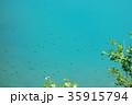 6月の青い池 おたまじゃくし 35915794