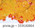 紅葉(空バック) 35916864