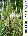 竹の子 35919316