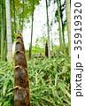 竹の子 35919320