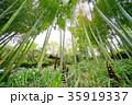 春の竹林 35919337