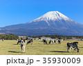 朝霧高原_乳牛と富士山 35930009