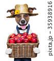農業 りんご アップルの写真 35938916