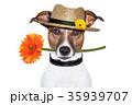 農耕 動物 背景の写真 35939707