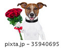 かわいらしい 可愛らしい 動物の写真 35940695