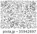 ガルバンソ ヒヨコマメ サヤマメのイラスト 35942697