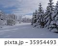 木 雪 雪景色の写真 35954493