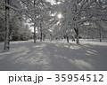 木 雪 雪景色の写真 35954512