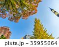 東京都 東京 秋の写真 35955664