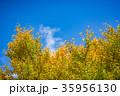 【神奈川県】秋イメージ 35956130