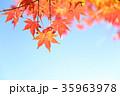 紅葉 秋 植物の写真 35963978