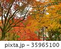 紅葉 秋 京都の写真 35965100