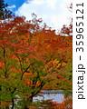 京都 紅葉 秋の写真 35965121