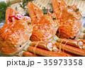 ズワイガニ 食材 35973358